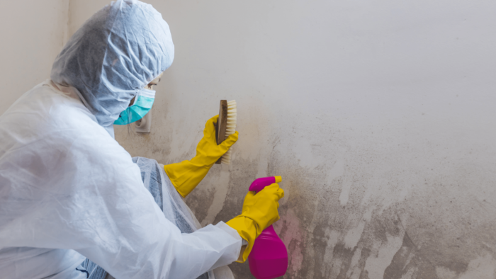 mold inspection CT