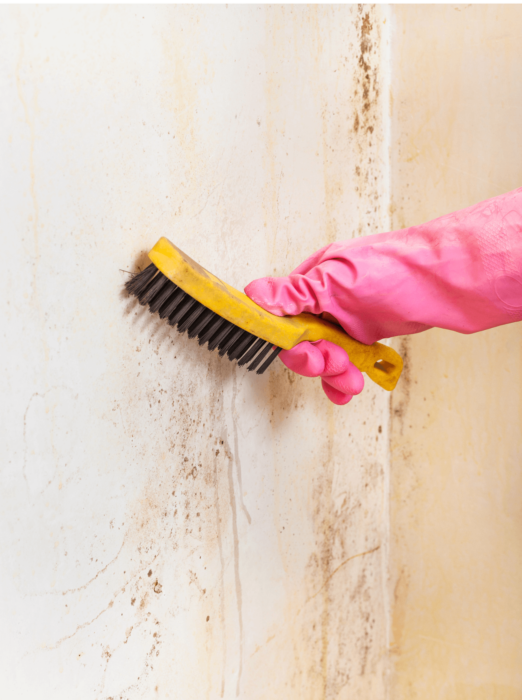 mold testing litchfield county